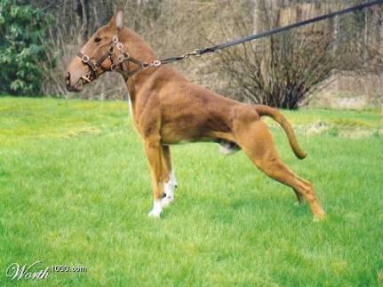 caballo-perro.jpg