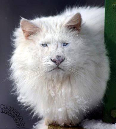 gato-leon.jpg