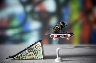 skate-mosca.jpg