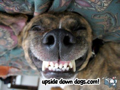 perro boca abajo